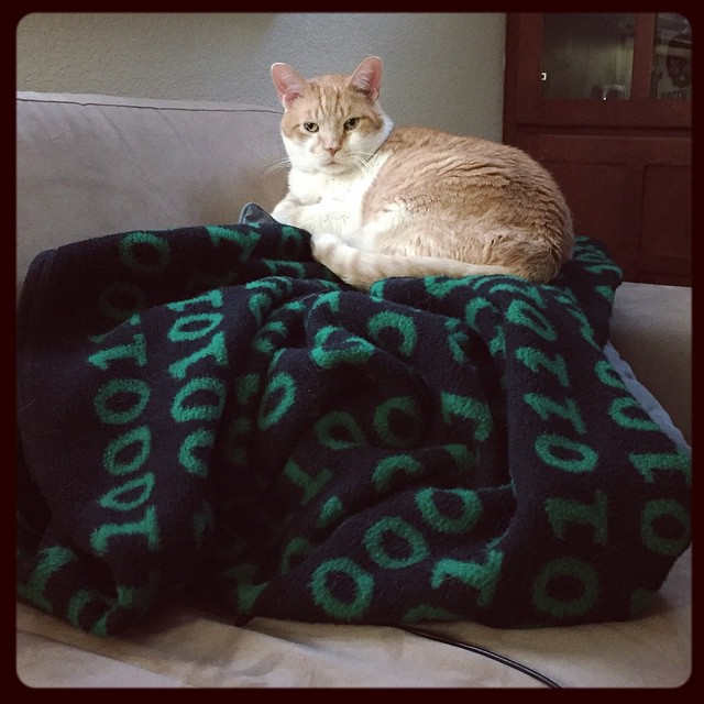 I present to you Chester Cat, King of the Blanket Pile! #chestercat #instacats #ilikenaps #blanketking